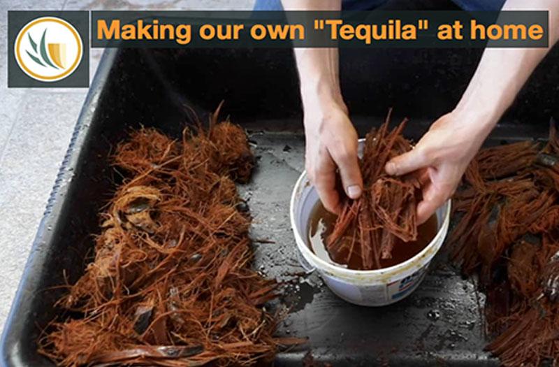 DIY-Tequila-Tequila-Selbst-herstellen
